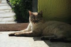 JPGE_1091_1 (Pablo Alvarez Corredera) Tags: dormi gatita gata gato animal rural mundo mascota