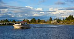 Boating on Nicomekl River - Port Elgin (SonjaPetersonPh♡tography) Tags: surrey southsurrey nicomeklriver elginheritagepark elginheritageparknaturetrail elginheritageparkwardsmarina portelgin nikond5200 nikon britishcolumbia canada river boating boat