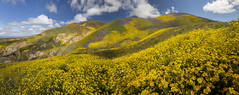 The Technicolor Hills (The Man in Red) Tags: bloom carrizo plain carrizoplain superbloom