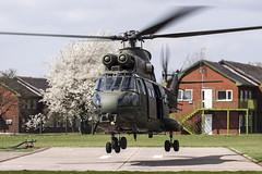 RAF Puma (Dan Kemsley) Tags: mod force air ministry royal 330 warrior sa puma barracks beacon defense joint stafford hc1 aerospatiale