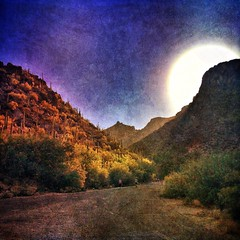 May morning, into the canyon (allophile) Tags: arizona painterly square landscape desert canyon sabinocanyon iphoneart texturesquared iphoneography snapseed mextures distressedfx