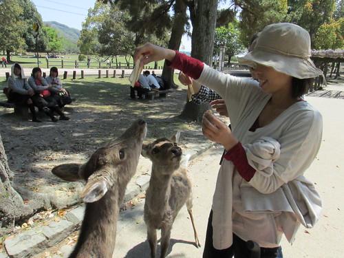 Promenade dans le parc de Nara, Japon