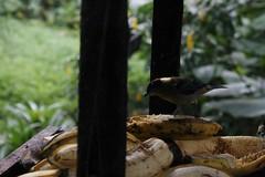 Curiosidad (Daniela Alejandra G) Tags: naturaleza macro green bird nature canon eos flora colombia flor natura alas pajaro canoneos quindío 400d canoneos400d canon400d calarcá