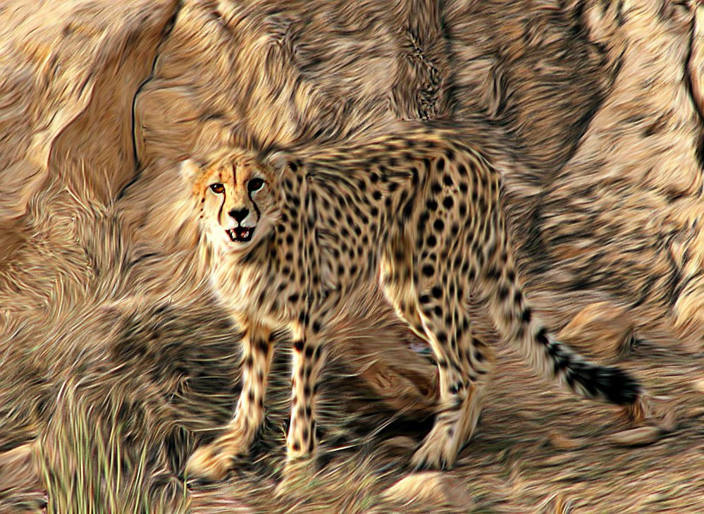 Cheetah drawings with color - photo#34