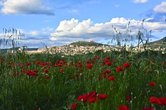 Spring in Assisi! (Antonio Cinotti ) Tags: italy primave