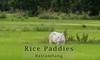 SL-1949-atitle rice paddies nr Bat-A-IMG_1987 (geoffgleave) Tags: cambodia paddy battambang bufallo