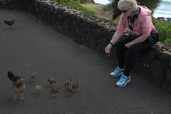 So my wife could feed them (urbanworm) Tags: wild chickens chicken hawaii nikon kauai chicks feed hen joni hens nikond3200