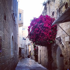 beautiful #alley #street in #jewish #quarter... (Thu Trang Ho) Tags: life street city travel light red sky urban sun house flower color building tree history nature beautiful architecture israel alley jerusalem middleeast jewish quarter uploaded:by=flickstagram instagram:photo=707922885534943901186442945 instagram:venuename=jewishquarter instagram:venue=265868295