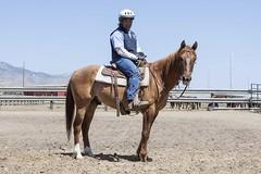 May 31, 2014 Saddle-Trained Wild Horse & Burro Adoption (BLM Nevada) Tags: horse training nevada center program northern saddle adoption blm carsoncity correctional inmates trained