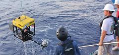 Medusa hauled aboard: IMG_3621 (Roving_photographer) Tags: expedition japan medusa nhk giantsquid discoverychannel architeuthis tsunemikubodera edithwidder ediewidder ejelly