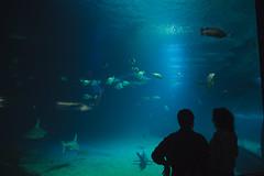 Acquarium way of love (Tottolandia) Tags: trip vacation españa valencia animal underwater acquarium ciudad artes span ciencias oceanografic ciudaddelasartesylasciencias loveanimals acquarius