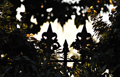 Friday (PhotosbyDi) Tags: garden vega euroa hff castironfence nikond90 happyfencefriday tamronf2890mmmacrolens