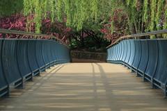 Bridges (Fret Spider) Tags: trees plants chicago nature gardens zeiss outside bridges symmetry apo bloom 5d balance canon5d manual polarizer botanicalgardens
