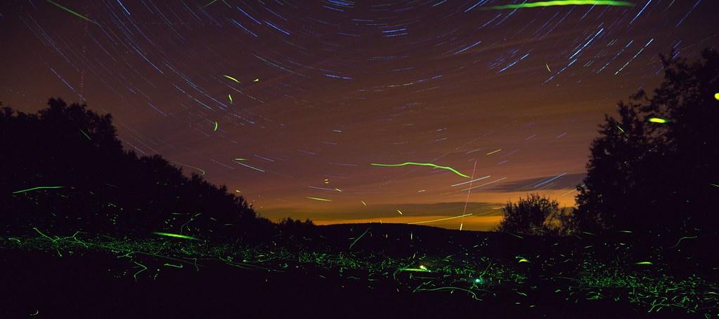 Fireflies & stars