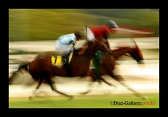 A day at the races (DIAZ-GALIANO) Tags: madrid red horses españa verde green yellow race canon caballo caballos spain 7 seven races 1001nights carreras siete carrera zarzuela thebestshot diazgaliano 1001nightsmagiccity
