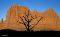 Capital Reef Park, Utah (MyKeyC) Tags: silhouette treesilhouette capitalreef capitalreefnationalpark