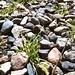 Tolerans men inte länge till...#tolerans #fs140608 #fotosondag #grass #stone