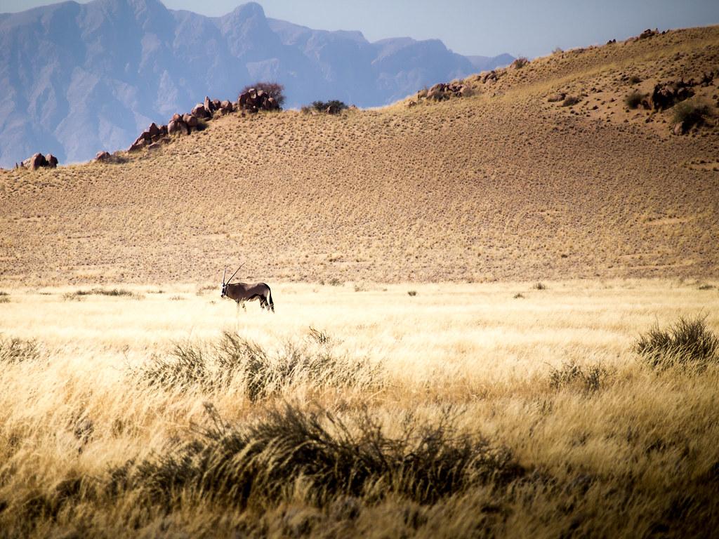 Orxy, Namibia