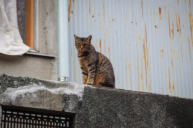 Today's Cat@2014-07-30