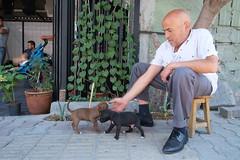 Istanbul - Gaziosmanpaşa (- yt -) Tags: turkey puppies istanbul carwash gaziosmanpaşa fujifilmxe1