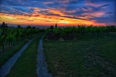 this sunrise Is on track... (paddy_bb) Tags: travel sunrise austria österreich burgenland 2014 nikond5300 paddybb deutschschützen