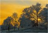 Winter sunset #3 (Clive1945) Tags: sky sun cold colour tree art frost impressionism impressionist flickrific d5000