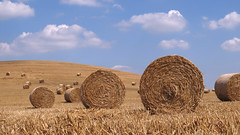 To everything, turn, turn, turn (Loe Giesen) Tags: isleofwight hayrolls iow