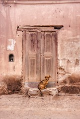 2017-03-23_05-40-24 (Micaela Moreira) Tags: dog abandoned pink tones colors animals popular beautyful town oldtown rural decay rustic colorful cute old vintage flickr architecture autumn softtones animal dogs naturephotography photography mobile
