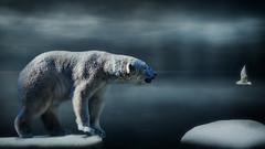 Wie komme ich da nur rüber (ellen-ow) Tags: bären eisbär hundeartige raubtiere säugetiere eis schnee himmel licht light sky möwe icebear arktis kalt blau gull ice eisschollen tier fell ellenow nikond5