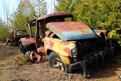 IMG_2681 (Irina Souiki) Tags: rusty crusty cars mcleansautowreckers milton ontario old oldcars