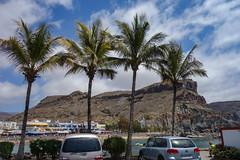 Canarian Coconut Palms (Philip McErlean) Tags: palms palmtrees coconut puertomogan grancanaria canary islands subtropical