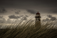 In a nutshell, grass, birds, lighthouse, clouds, simple. (markrd5) Tags: wales talacre coast landscape lighthouse atmosphere mood grass clouds cumulus marramgrass