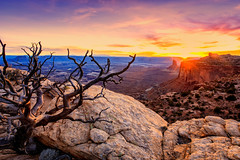 Sunset at Candlestick Tower (KPortin) Tags: canyonlandsnationalpark utah tree sunset sun cliffs rocks candlesticktower geology explore