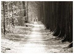 Bikers (Gert Vanhaecht) Tags: canonsx720hs belgium gertvanhaecht tree zoniënwoud monochrome composition trees canon landscape pathway nature