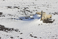 Whale Bones (colinemcbride) Tags: iceland ísland winter north northern icelandic moonwalker tours snow south coast tour eyjafjallajökull volcano beach black sand ocean atlantic