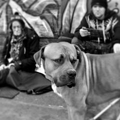 IMG_2645 (Kathi Huidobro) Tags: staffie staffordshirebull urbanscene urban dog animals londonstreets streetphotography candid hardlife blackwhite bw monochrome london streetdog streetlife dogslife