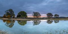 Mogshade Panorama (nicklucas2) Tags: newforest nature pond mogshade tree water reflection panorama landscape