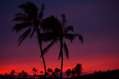 Kona Sunset (Geoff Sills) Tags: kona sunset oahu hawaii palm trees purple pink orange nikon d700 70200 28 telephoto paradise beautiful geoffrey william sills geoff illumeon digital
