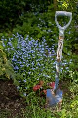 Best get started (sarah.wood979) Tags: spring weeds flowers spade garden gardening blue