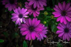 Flowers-6399