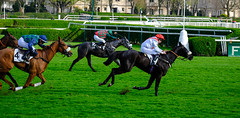 GAF photo-8.jpg (GAF photo) Tags: auteuil courseshippiques