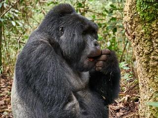 Uganda 34