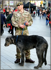 2nd Battalion Coldstream Guards (* RICHARD M (Over 6 million views)) Tags: street candid coldstreamguards britisharmy soldier guardsman army armedservices wolfhound dog regimentalmascots dogs uniforms britisharmyuniforms military beret recruiter armyrecruitment liverpool merseyside britishsoldiers canine posterboy lanternjaw hunk beefcake militarybearing camouflage boots belts berets militaryberets macho heman