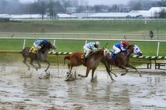 "2017-03-31 (42) r4 Jevian Toledo on #3 The Pulse for the win (JLeeFleenor) Tags: photos photography md maryland marylandracing marylandhorseracing laurelpark horseracing jockey جُوكِي ""赛马骑师"" jinete ""競馬騎手"" dżokej jocheu คนขี่ม้าแข่ง jóquei žokej kilparatsastaja rennreiter fantino ""경마 기수"" жокей jokey người horses thoroughbreds equine equestrian cheval cavalo cavallo cavall caballo pferd paard perd hevonen hest hestur cal kon konj beygir capall ceffyl cuddy yarraman faras alogo soos kuda uma pfeerd koin حصان кон 马 häst άλογο סוס घोड़ा 馬 koń лошадь"