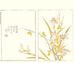 Butterfly flower and Chinese quince (Japanese Flower and Bird Art) Tags: flower butterfly iris japonica iridaceae chinese quince chaenomeles speciosa rosaceae shumboku ooka kano woodblock picture book japan japanese art readercollection