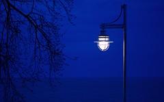 Lakeside Lantern (imageClear) Tags: light streetlight streetlamp nautical lake dusk evening beauty blue branches beach aperture nikon d500 105mm imageclear flickr photostream