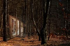 Spiegel der Erinnerungen...Mirror of the recollections (smithjuha440) Tags: wald wernerwald spiegel composing photoshop nikon baum holz glas licht braun erde