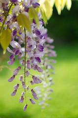 Reto Primavera (mmateomoralesvila) Tags: flores contraluz primavera jardin atardecer