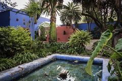 Mexico City Frida Kahlo Museum-2