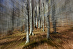 When you're focused... (Francizc Chachula) Tags: nikon d7200 18105mm spring 2017 forest tree trees nature natural leaves brown green focus composition cacica romania blur movement target